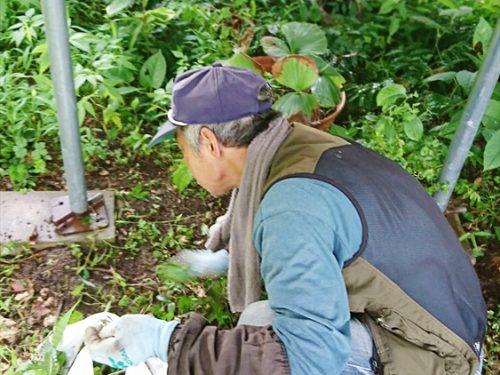 写真:草取り作業②
