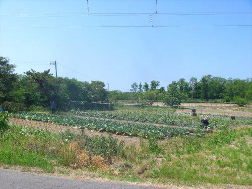 写真:農業室